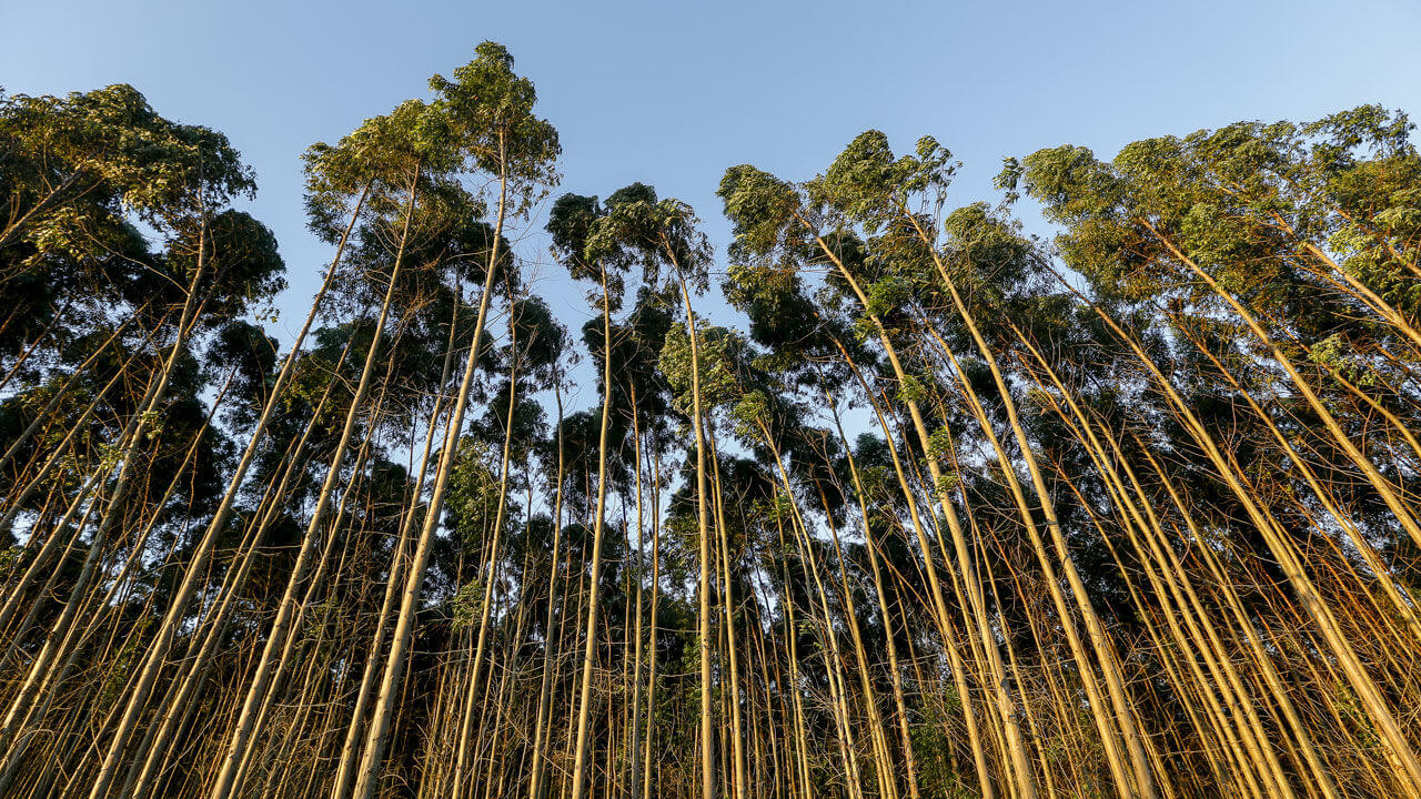 Benefits-Forestry SFI ATFS (Sustainable Forestry)-ISO PROS #18